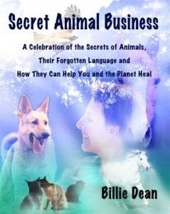 Secret Animal Business front cover