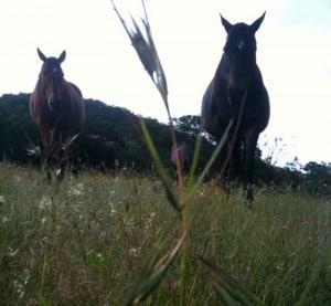 Ballyoncree horses on a hill