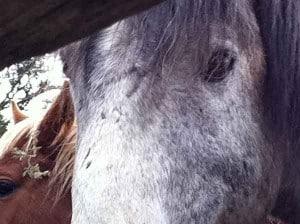 Merline, one of the North Kossie brumbies at Ballyoncree