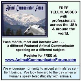Animal Communicator Forum